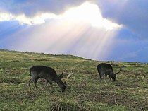 Deer in Bradgate Park.jpg