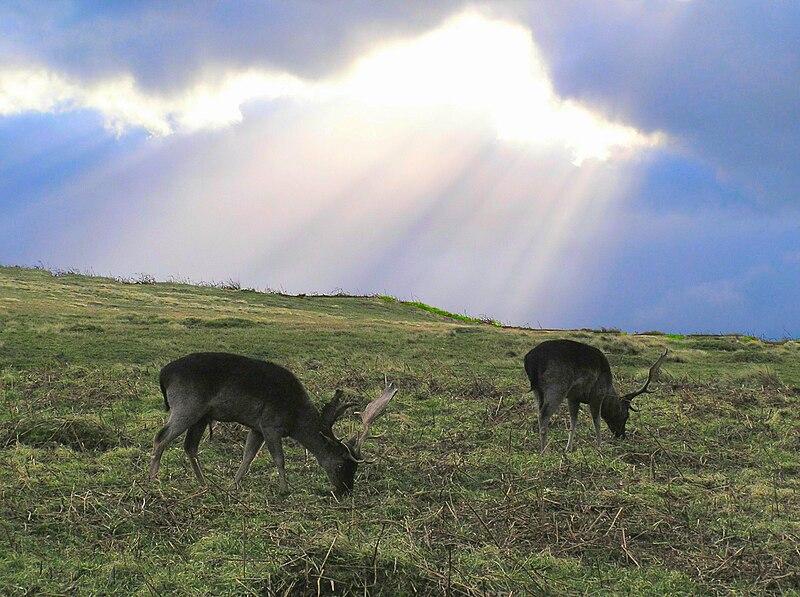 Deer in Bradgate Park Leicestershire.