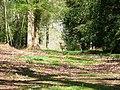 Deer in Tylers Copse - geograph.org.uk - 757269.jpg