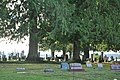 Deer walking through Saint Francis Xavier Mission Cemetery (Cowlitz) 02.jpg