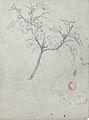 Dehodencq A. - Pencil - Etude d'une branche d'arbre, probablement de figuier - 20.3x15.3cm.jpg