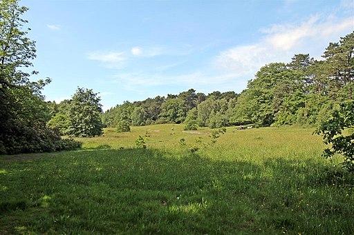 Dell next to Hillbark, Thurstaston Common (geograph 2990462)