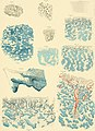 Denkschriften der Kaiserlichen Akademie der Wissenschaften, Mathematisch-Naturwissenschaftliche Classe (1885) (20666091800).jpg