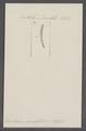Dentalium variabile - - Print - Iconographia Zoologica - Special Collections University of Amsterdam - UBAINV0274 081 10 0037.tif