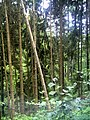 Denzlingen Wald - panoramio (1).jpg