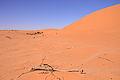 Desert (6486329823).jpg
