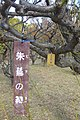 Detail in the Orchard at Osaka Castle.jpg