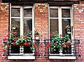 Deux fenêtres aux géraniums, Rue Louis Morard (Paris).jpg