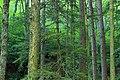 Devils Hole Creek (Revisited) (13) (28806156006).jpg