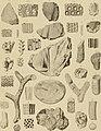 Die Versteinerungen des rheinischen Schichtensystems in Nassau. Mit einer kurzgefassten Geognosie dieses Gebietes und mit steter Berücksichtigung analoger Schichten anderer Lander (1850) (14784204555).jpg