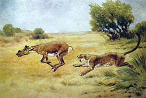 Dinictis - Restoration of Dinictis chasing Protoceras, Charles R. Knight