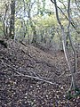 Ditch of Ancient Fort in Mistleberry Wood - geograph.org.uk - 281193.jpg