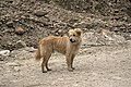 Dog D35 7063 01.jpg