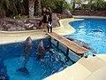Dolphins (7980977907).jpg