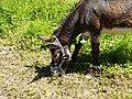 Donkey @ Saint-Jorioz (50487725783).jpg