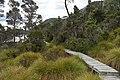 Dove Lake Circuit Walking Track, Cradle Mountain - Lake St Clair National Park 31.jpg