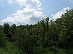 Dovhorakivskyi Botanical Reserve (2019.05.26) 13.jpg