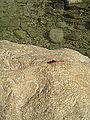 Dragonfly (4070421070).jpg