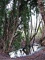 Drain beside the path - geograph.org.uk - 1080852.jpg