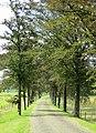 Dreef naar domein Nieuwenhoven - panoramio.jpg