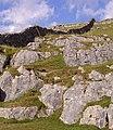 Dry stone wall near Ingleton 01.JPG