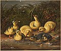 Ducklings (Boston Public Library).jpg