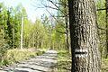Dziewicza Gora (osada, village) (2).JPG