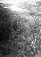 ETH-BIB-Bachvegetation am Makungu-River-Kilimanjaroflug 1929-30-LBS MH02-07-0450.tif