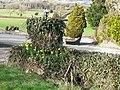 Early 'daffs.' near Corntown - geograph.org.uk - 1151591.jpg