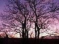 Early sunset, Galmpton direction - geograph.org.uk - 1054323.jpg