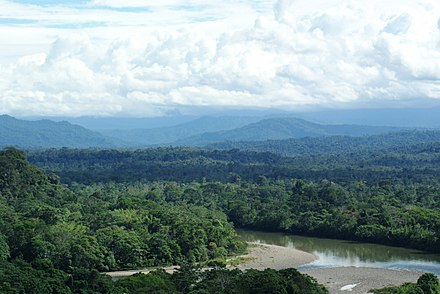 Amazon rainforest in Ecuador Ecuadorian Amazon rain forest, looking toward the Andes.jpg