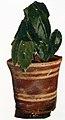 Edvard Munch - Potted Plant.jpg