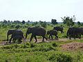 Eléphants-Uda Walawe National Park (2).jpg