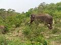 Elephant at Bannerghatta zoo - panoramio.jpg