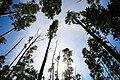 Ella Forest, Srilanka.jpg