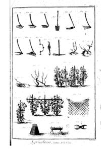 Photographie montrant une planche illustrée d'outils viticoles et modes de palissage. Les deux lignes du haut représentent diverses formes d'outils aratoires. Deux autres lignes montrent des modes d'attache de la vigne sur son support et de marcottage.
