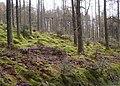 Ennerdale Forest - geograph.org.uk - 764088.jpg