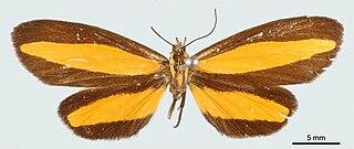 <i>Erbessa</i> Genus of moths