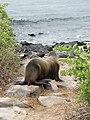 Espanola - Hood - Galapagos Islands - Ecuador (4871581850).jpg