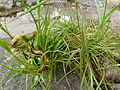 Etrange plante 2.JPG