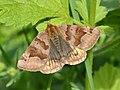 Euclidia glyphica in Botevgrad, Bulgaria.jpg