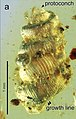 Euthema hesoana holotype Fig4 A.jpg