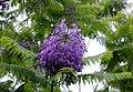 FLOWERS 4 (7422209126).jpg