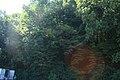 FOREST . (2011-08-09 10-57) - panoramio.jpg