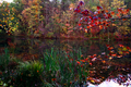 Fall-color-reeds-trees-lake - West Virginia - ForestWander.png