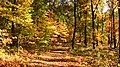 Fall - panoramio - Ron Shawley.jpg