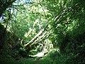 Fallen tree - geograph.org.uk - 1406623.jpg