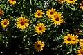 False Yellow Sunflower Bunch PLT-FL-DS-10.jpg