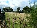 Farm Field - geograph.org.uk - 93679.jpg