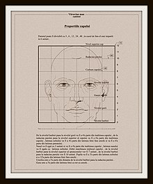 Body proportions - Wikipedia